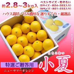 特選ご贈答用・土佐小夏(高知県産)・中箱(約2.8~3kg)・S〜Mサイズ