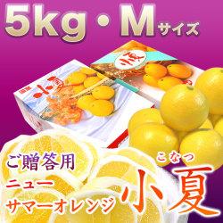 みんなの土佐小夏(とさこなつ)・高知県産ハウス小夏・ご贈答用・大箱(約5kg)・Mサイズ【送料無料】