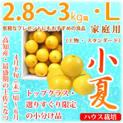 土佐小夏(高知県産)・家庭用(上物・スタンダード)・中箱(約2.8~3kg)・Lサイズ