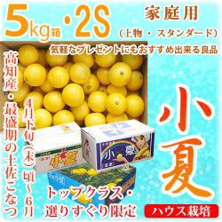 土佐小夏(とさこなつ)・高知県産・家庭用(上物・スタンダード)・大箱(約5kg)・SSサイズ