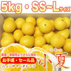 土佐小夏(とさこなつ)・セール品・5kg・2S~Mサイズ【送料無料】