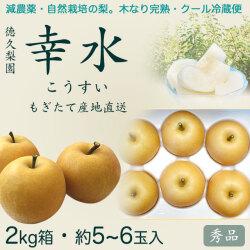 幸水梨(こうすいなし)秀品2kg・5〜6玉入り【産地直送】
