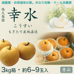 幸水梨(こうすいなし)秀品3kg・6〜9玉入り【産地直送】