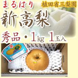 新高梨(にいたかなし)・高知県針木産・植田省三梨園・秀品・ご贈答用・1kg1玉入