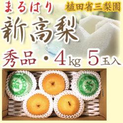 【産地直送】針木産の新高梨(にいたかなし)・高知市針木梨組合(まるはり)・秀品(ご贈答用)・約4kg・5玉入【送料無料】