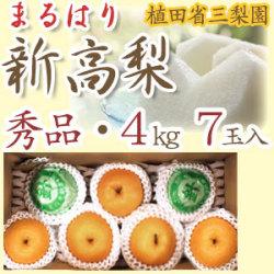 【産地直送】針木産の新高梨(にいたかなし)・高知市針木梨組合(まるはり)・秀品(ご贈答用)・約4kg・7玉入【送料無料】