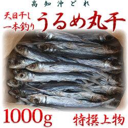 高知県産「天日干し・一本釣りうるめ丸干し」・特撰上物・1kg 【送料無料】