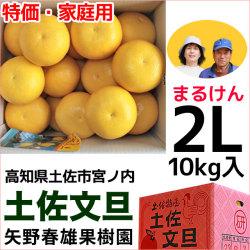 まるけん土佐文旦・ご家庭用・2Lサイズ・10kg・矢野春雄果樹園【送料無料】