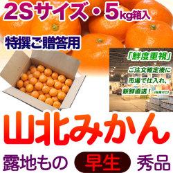 【送料無料】生産者厳選・山北みかん・露地もの・早生・秀品(特撰ご贈答用)・5kg箱・2Sサイズ