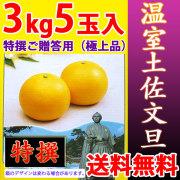 温室土佐文旦(ハウス栽培品)・特撰ご贈答用(極上品)・3kg・5玉入【送料無料】