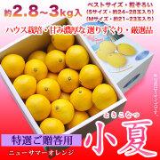 特選ご贈答用・土佐小夏(高知県産)・中箱(約2.8~3kg)・S~Mサイズ