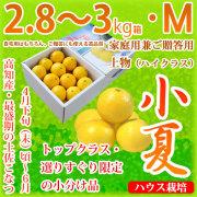 土佐小夏(高知県産)・家庭用兼ご贈答用(上物・ハイクラス)・中箱(約2.8~3kg)・Mサイズ