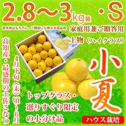 土佐小夏(高知県産)・家庭用兼ご贈答用(上物・ハイクラス)・中箱(約2.8〜3kg)・Sサイズ