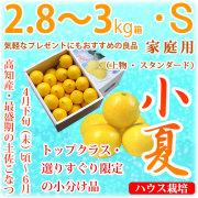 土佐小夏(高知県産)・家庭用(上物・スタンダード)・中箱(約2.8~3kg)・Sサイズ