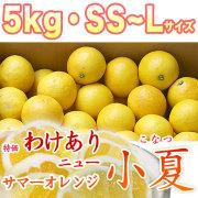 【限定販売】土佐小夏(とさこなつ)・高知県産・特価わけあり品・大箱(約5kg)・SS〜Lサイズ【送料無料】