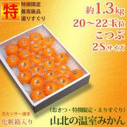 山北温室みかん・特撰秀品・約1.3kg・20~22玉・小粒・2Sサイズ