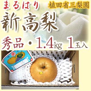 新高梨(にいたかなし)・高知県針木産・植田省三梨園・秀品・ご贈答用・1.4kg1玉入