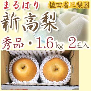 【産地直送】針木産の新高梨(にいたかなし)・高知市針木梨組合(まるはり)・秀品(ご贈答用)・約1.6kg・2玉入【送料無料】