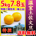 温室土佐文旦(ハウス栽培品)・特撰ご贈答用(極上品)・5kg・7〜8玉入【送料無料】