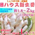 【甘酢漬け用】ハウス新生姜(しょうが)・特選(A品)・Lサイズ・約1.8~2kg【クール便】