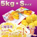 みんなの土佐小夏(とさこなつ)・高知県産ハウス小夏・ご贈答用・大箱(約5kg)・Sサイズ【送料無料】