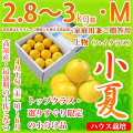土佐小夏(高知県産)・家庭用兼ご贈答用(上物・ハイクラス)・中箱(約2.8〜3kg)・Mサイズ