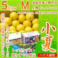 土佐小夏(とさこなつ)・高知県産・家庭用兼ご贈答用(上物・ハイクラス)・大箱(約5kg)・Mサイズ