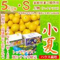 土佐小夏(とさこなつ)・高知県産・家庭用兼ご贈答用(上物・ハイクラス)・大箱(約5kg)・Sサイズ