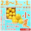 土佐小夏(高知県産)・家庭用(上物・スタンダード)・中箱(約2.8〜3kg)・Lサイズ