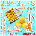 土佐小夏(高知県産)・家庭用(上物・スタンダード)・中箱(約2.8〜3kg)・Sサイズ