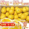 安い!土佐小夏(とさこなつ)・お手頃・セール品・5kg・2S〜Mサイズ【送料無料】