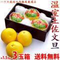温室土佐文旦(ハウス栽培品)・約1.5kg・3玉入【送料無料】