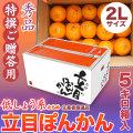 【送料無料】立目(たちめ)ぽんかん(低しょう系)特撰ご贈答用・5kg箱・2Lサイズ