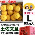 まるけん土佐文旦・ご家庭用・Lサイズ・10kg・矢野春雄果樹園【送料無料】