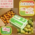 山北みかん・甘酸っぱい極早生・赤秀品・5kg箱・S~Mサイズ【送料無料】