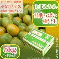 山北みかん・甘酸っぱい極早生・赤秀品・5kg箱・S〜Mサイズ