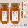 日本ミツバチの蜂蜜・「四万十・山蜜」・約900ml瓶入×2本【天然はちみつ(非加熱)・高知県産】