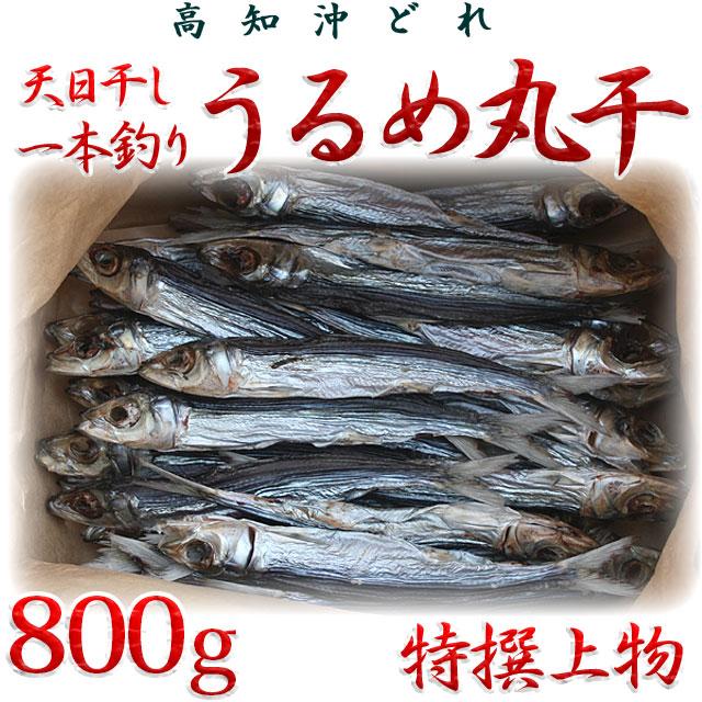 高知県産「天日干し・一本釣りうるめ丸干し」・特撰上物・800g 【送料無料】
