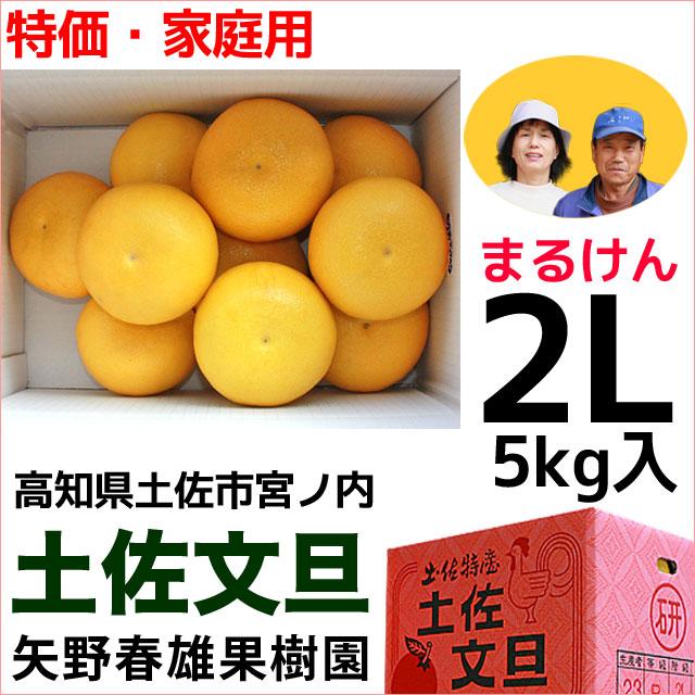 まるけん土佐文旦・ご家庭用・2Lサイズ・5kg・矢野春雄果樹園【送料無料】