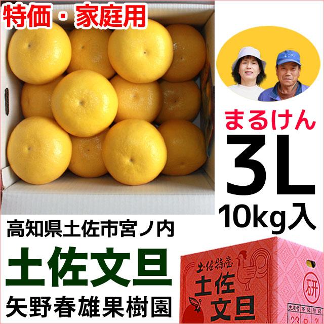 まるけん土佐文旦・ご家庭用・3Lサイズ・10kg・矢野春雄果樹園【送料無料】