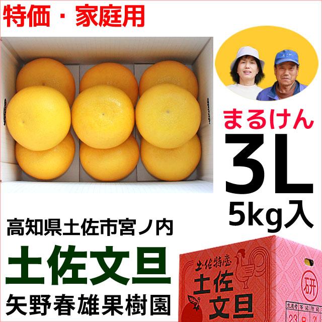 まるけん土佐文旦・ご家庭用・3Lサイズ・5kg・矢野春雄果樹園【送料無料】