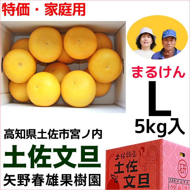 まるけん土佐文旦・ご家庭用・Lサイズ・5kg・矢野春雄果樹園【送料無料】