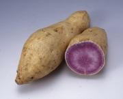 鹿児島県種子島産 種子島ゴールド (1kg)