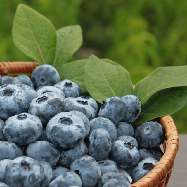 ブルーベリージャム(微糖)+ブラックベリー(ジャム・コンポート)セット 大【森の畑】