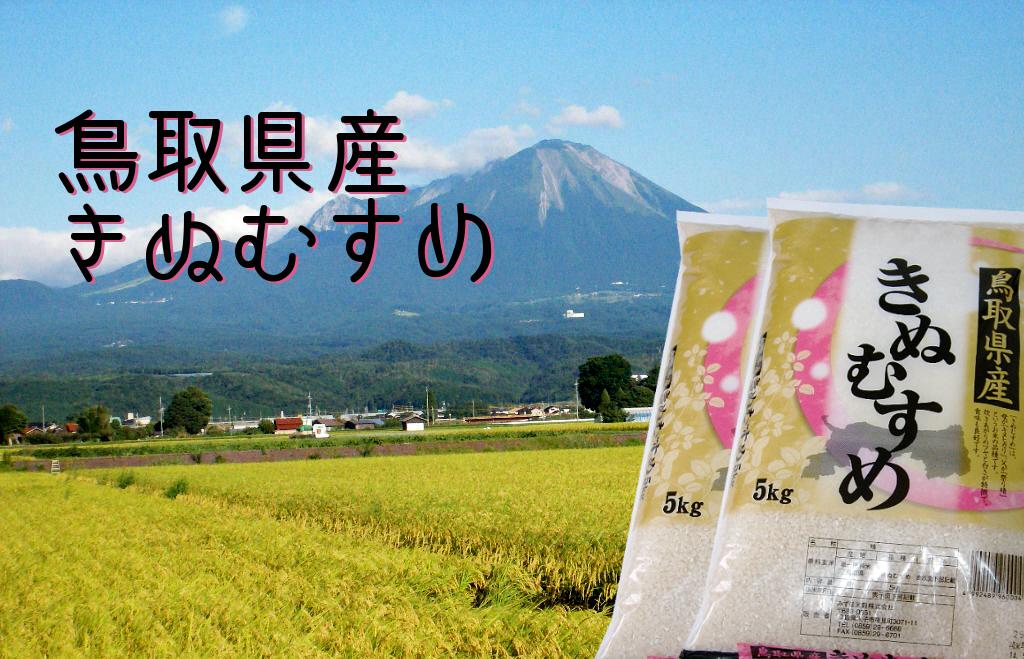 鳥取県産 きぬむすめ