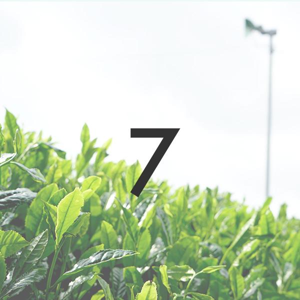 新茶「プレミア煎茶」 2021年製/50g ※5月中旬より順次発送  |被覆期間7日|宇治茶の新茶 メール便「可」