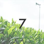 新茶「プレミア煎茶」 2021年製/50g ※5月中旬より順次発送   被覆期間7日 宇治茶の新茶 メール便「可」