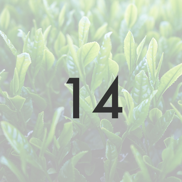新茶「かぶせ茶」 2021年製/50g ※5月中旬より順次発送   被覆期間14日 宇治茶の新茶 メール便「可」