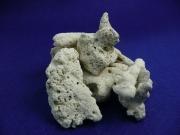 サンゴ砂 ろ材用骨サンゴ 50ミリ前後