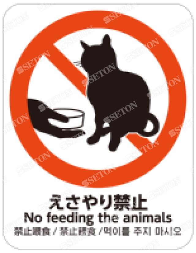 えさやり禁止_猫
